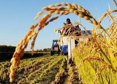 多项农业金融创新措施酝酿待出