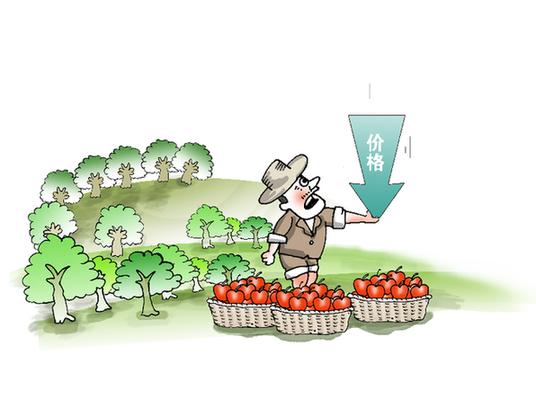 多地苹果出库慢于常年 部分果品开始腐烂